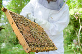 Man holding bee hive frame