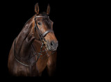 Koń wygląda na czarnym tle