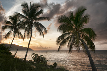 Palm Trees on the Beach at Sunset in the Virgin Islands