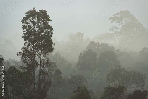 morning fog in dense tropical rainforest, Thailand - 139908809