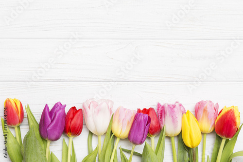 Fototapeta colorful tulips on white wooden background.