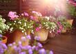 Quadro Summer flowers on terrace