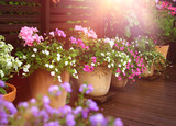 Summer flowers on terrace
