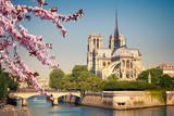 Matki Bożej z Paryża wiosną, we Francji