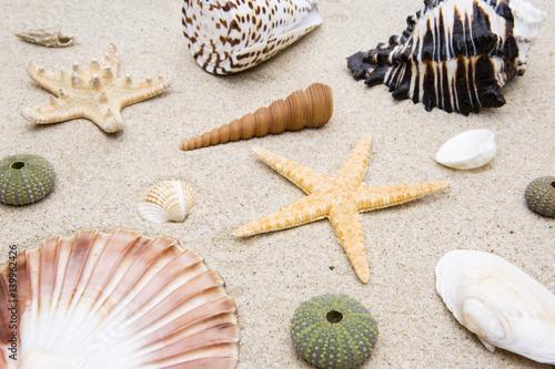 Muscheln und Schnecken im Sand