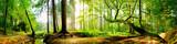 Idyllischer Wald mit Bach bei Sonnenaufgang - 139969469