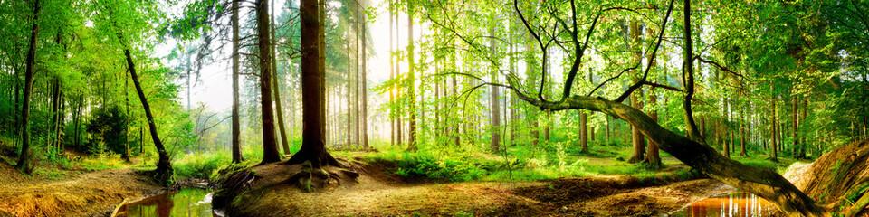 Idyllischer Wald mit Bach bei Sonnenaufgang © John Smith