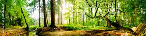 Idylliczny las z strumykiem przy wschodem słońca