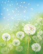 Vector  nature  background,  dandelions flowers field and  blue sky.