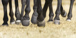Closeup detail of herd of horse legs running - 139976828