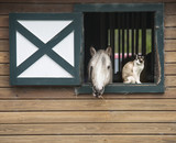 Horse in stall window with cat companion