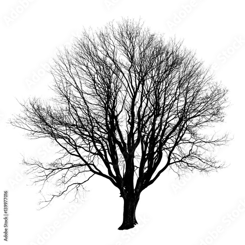 Black silhouette of a tree without leaves on white background.