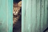 Little kitten peeping from inside the shed on the backyard