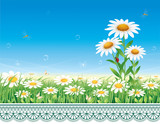 Flower meadow with daisies on a background of an ornament.Vector illustration