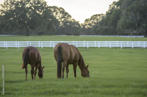 Pastoral horse farm scenic at sunset
