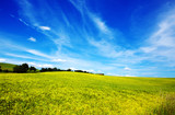 Field of grass and blue sky: