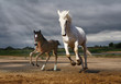 A horse and a foal jump from the rain - 140075670