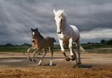 Koń i źrebak skok od deszczu