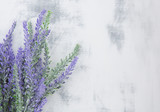 Lavender on white background. Vintage. - 140084098