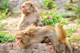Monkey sitting in Swayambhunath monkey temple in Nepal