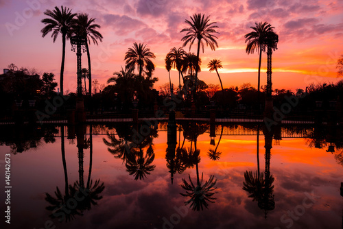 Palm Trees Reflected in the Water in Maria Luisa Park at Sunset, Seville, Andalusia, Spain