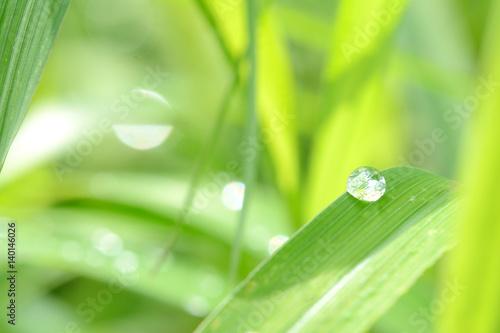 Papiers peints Vert chaux 緑の葉と水滴