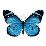 butterfly with open wings top view, the symmetrical drawing, graphics, sketch, vector, color illustration, blue wings with a black pattern on the edges
