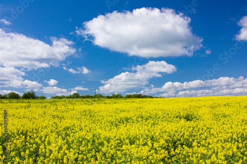 Yellow blooming flowering field and blue sky with white clouds. Landscape with yellow flowers of rapeseed. Russia, Europe.