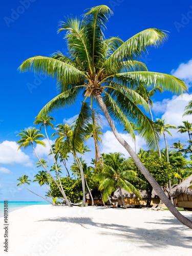 Urlaub am Strand mit Meer und Palmen