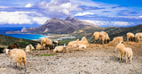 Traditional Greece series. landscapes of Crete island with sheeps, mountains and sea