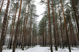 snowy winter forest in mist