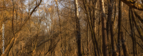 Magical spring forest - 140253650