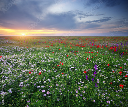 Fototapeta Spring flowers in meadow.