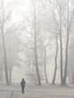 Spaziergängerin unter Bäumen im winterlichen englischen Garten, München