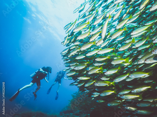 School of fish in south Thailand Poster