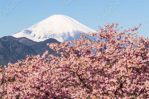 Poster Kawazu Sakara and Mountain Fuji in spring season