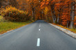 Empty road towards to colorful woods at fall