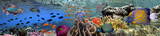 Coral reef underwater panorama with school of colorful tropical fish - 140329815