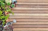 collection plantes succulentes sur plancher en bois