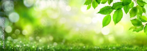 Leinwandbild Motiv Grüne Blätter verzieren einen breiten Bokeh  Hintergrund aus Glanzlichtern in der Natur