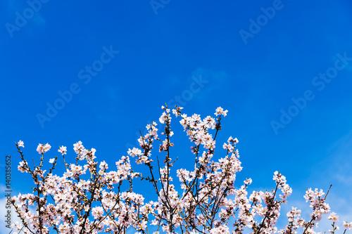 Poster Spring