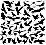 Birds of prey vector silhouettes collection