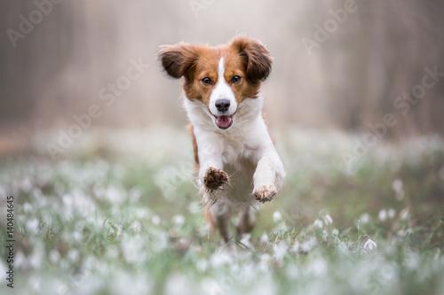 chien-heureux