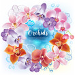 Greeting card with orchids flowers