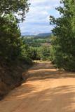 Camino cortafuegos de tierra en paisaje de bosque de robles y pinos con montañas al fondo