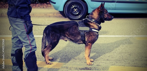 Fotobehang Palermo trained police dog during surveillance along the streets of the