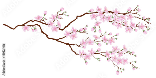 Fototapeta Horizontal branch of cherry blossoms. Realistic vector illustration on isolated background.