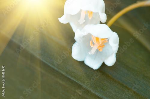 Aluminium Lelietjes van dalen Flower lily of the valley, closeup, spring