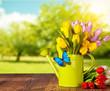 Spring tulip flower bouquet on wooden planks