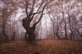 Crimea forest